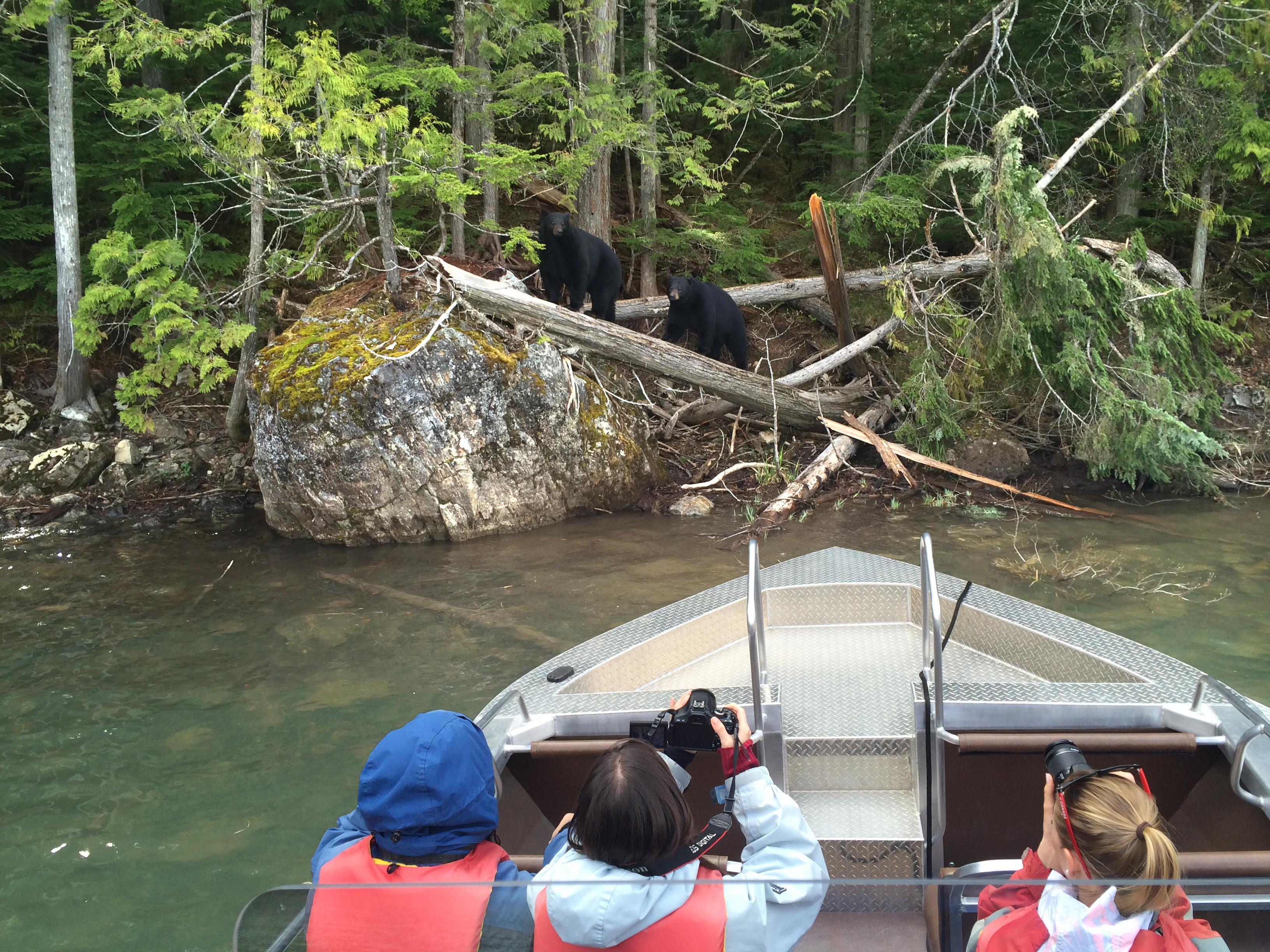Two bears near Blue River, Thompson