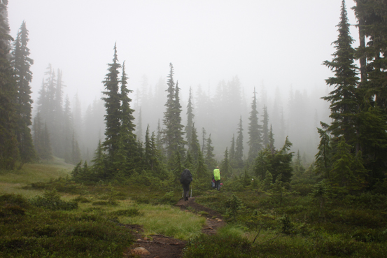 Hikers travel through a lush landscape on a foggy day.