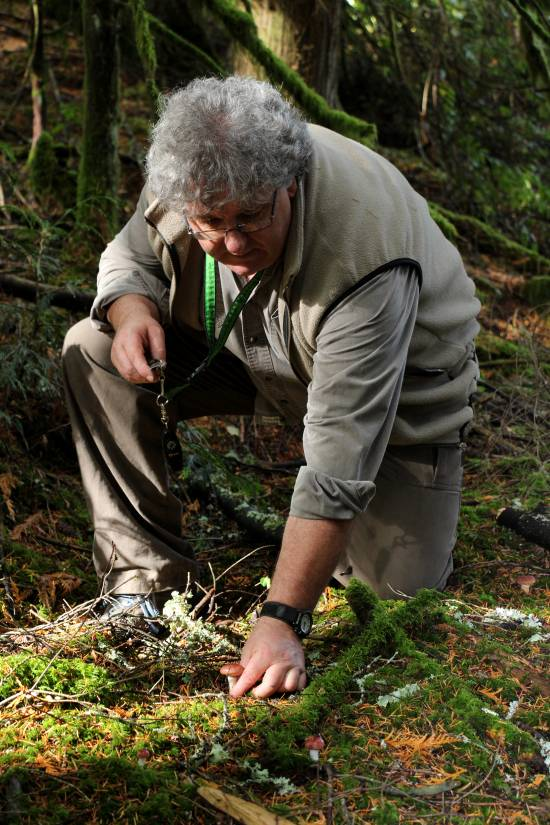 A man bends over to pick a mushroom off the forest floor.