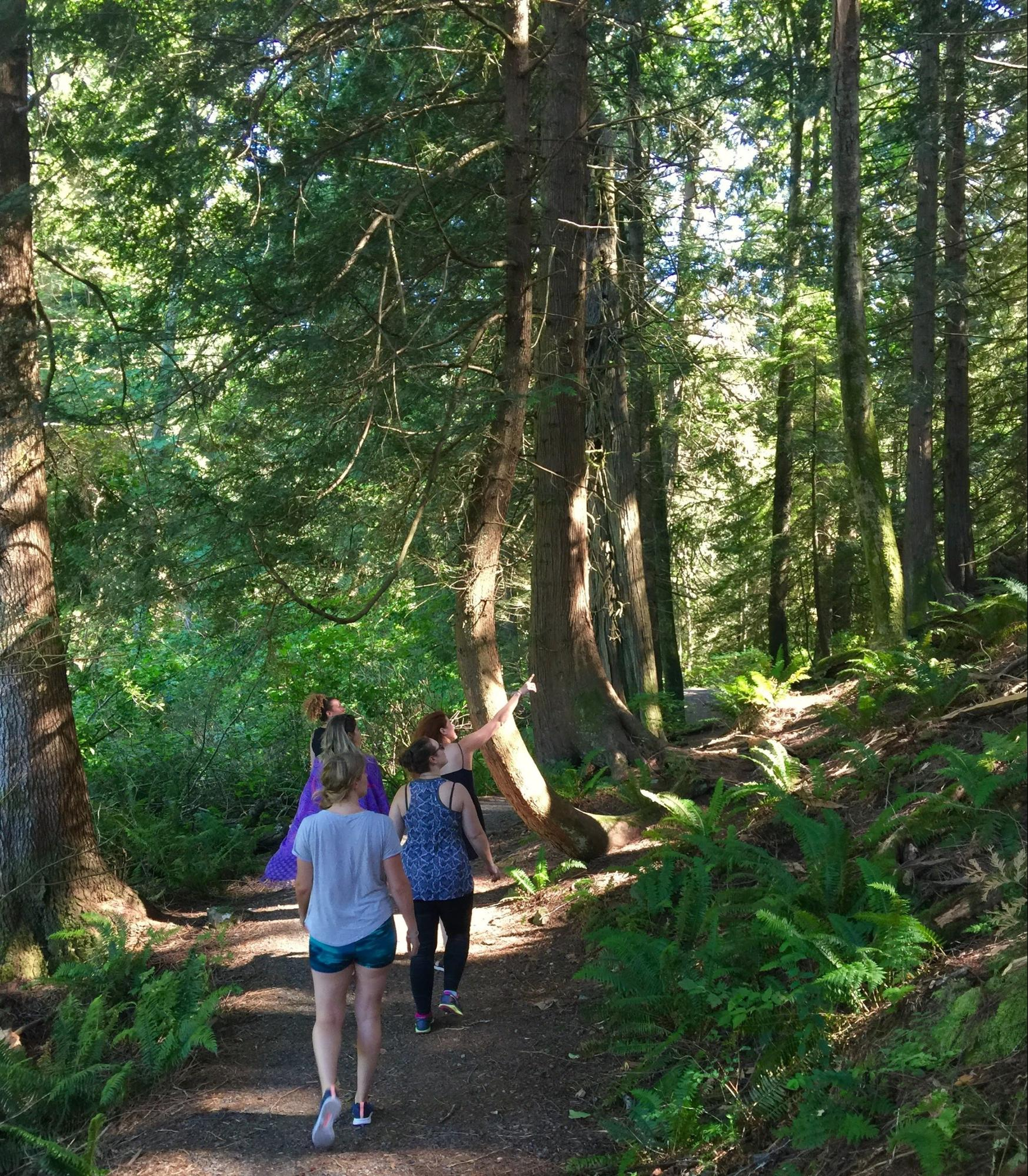 A group of hikers on a path lined with mature trees.