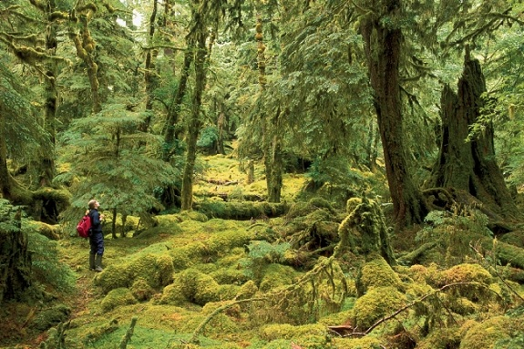 A hiker stops to take in the magic of the overgrown Gwaii Haanas National Park Reserve.