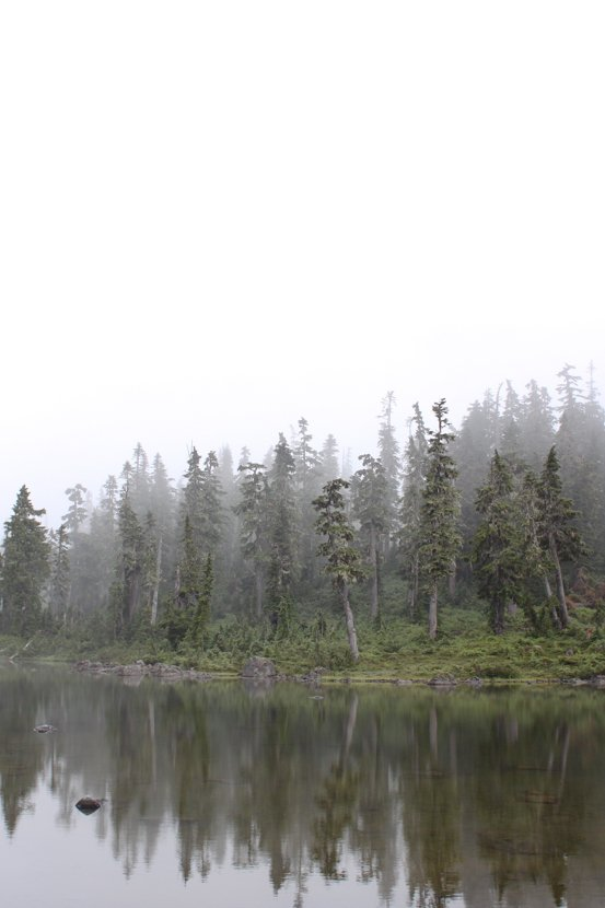 Fog clings to a small body of water, lined with tall trees.