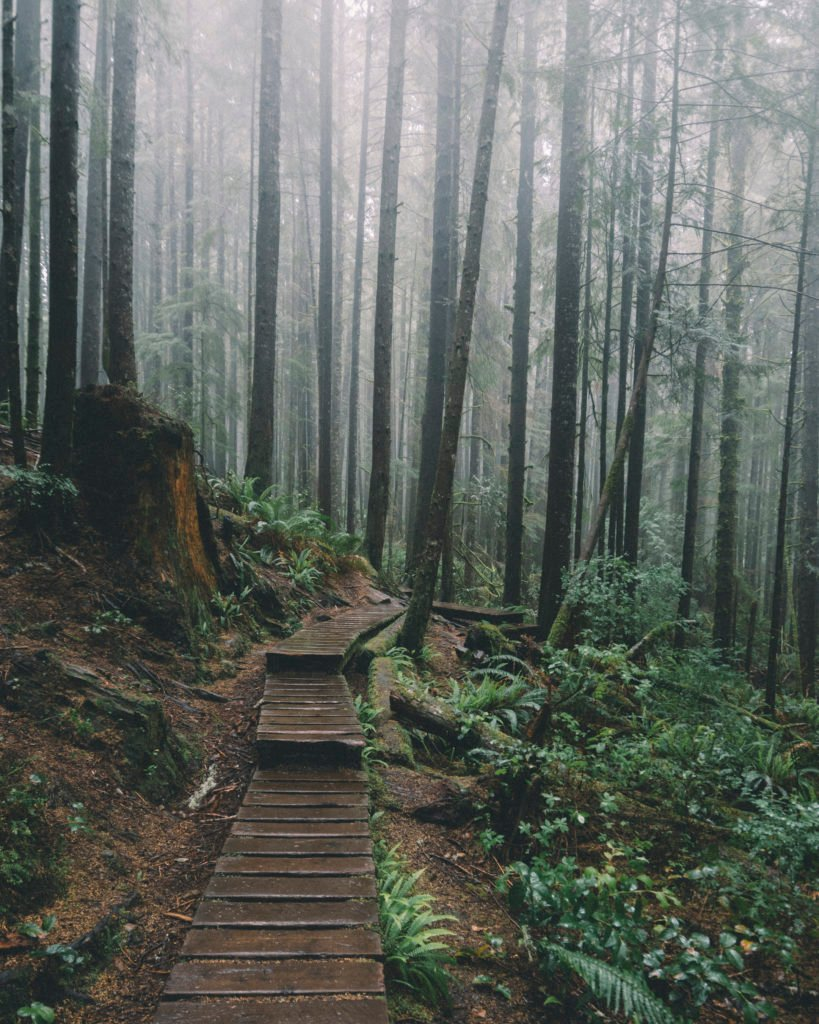 A wooden boardwalk winds through a misty green forest.