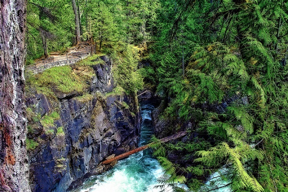 Dense trees, a cliff and a log crossing a creek at Little Qualicum Falls Provincial Park.