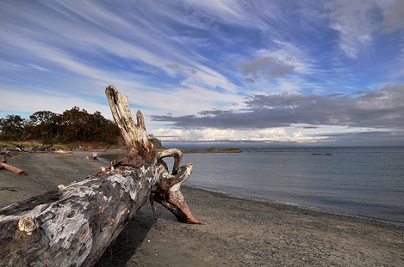 A massive log and other driftwood on the shores of Piper Lagoon in Nanaimo, with a view of the lagoon to the right, trees in the foreground and blue skies above