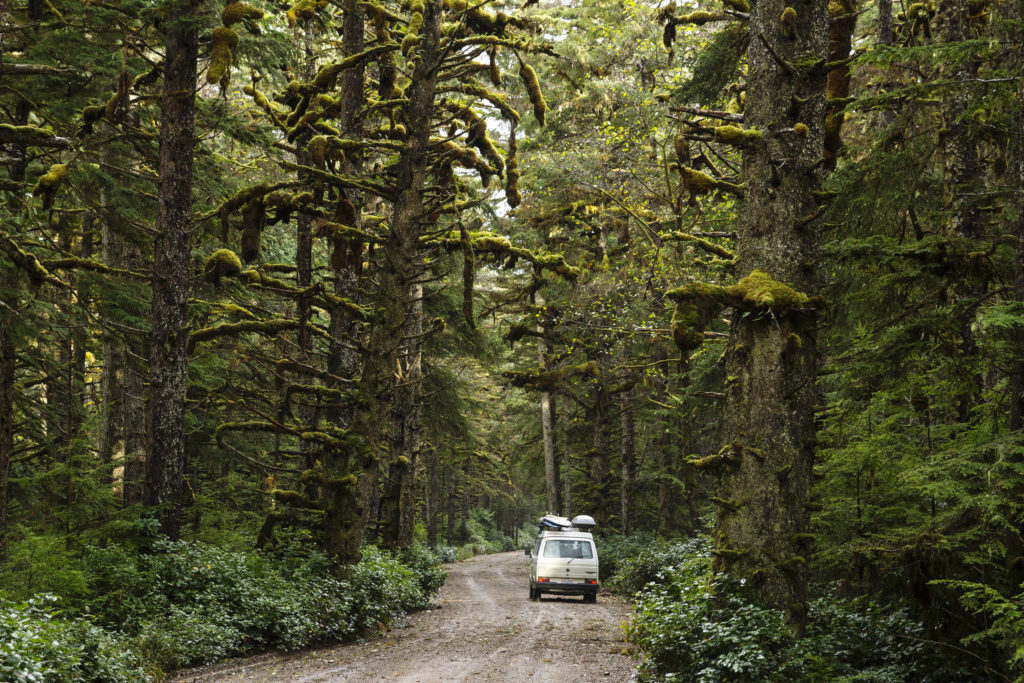 An RV drives down a dirt road lined with trees.
