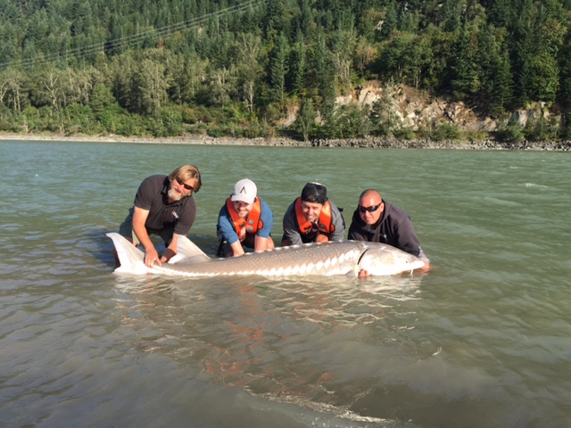 Paul and Alex with their guides from Fraser River Lodge, pose with the sturgeon caught and released in the Fraser River. Photo: Rick Graham