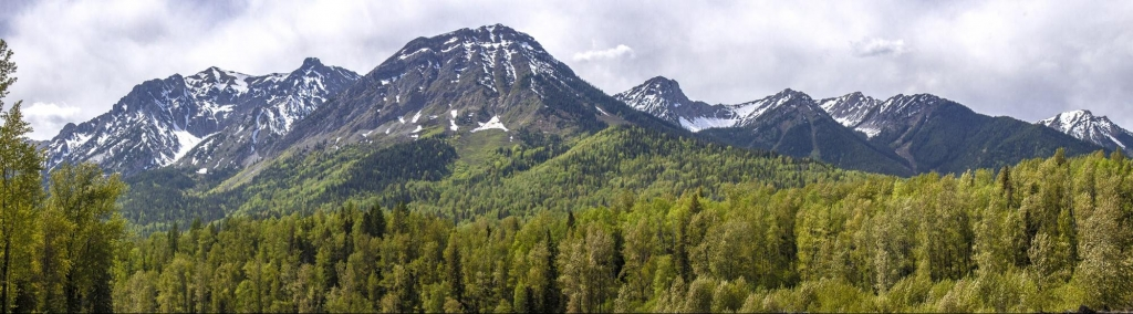 Panoramic of a dense forest at the base of a snow-capped mountain range.