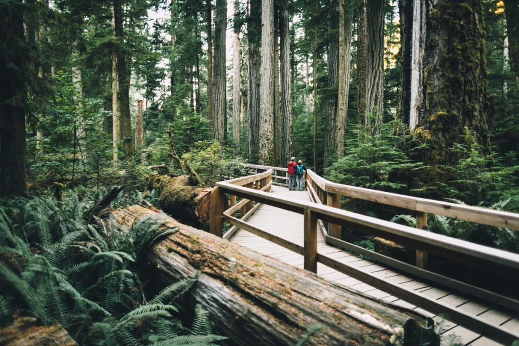 Cathedral Grove in MacMillan Provincial Park | Graeme Owsianski