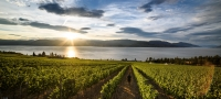 Wineries & Wine Tours