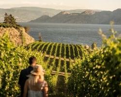 A young couple walks in the Evolve Cellars vineyard overlooking Okanagan Lake in Summerland, BC.