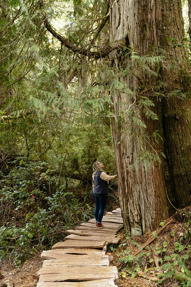Walking through old growth rainforest on on the Big Tree Trail on Meares Island | Jeremy Koreski