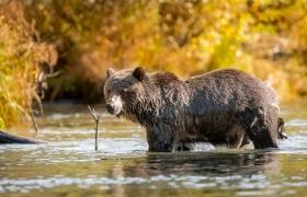 4 Active Wildlife Adventures in BC4 Active Wildlife Adventures in BC