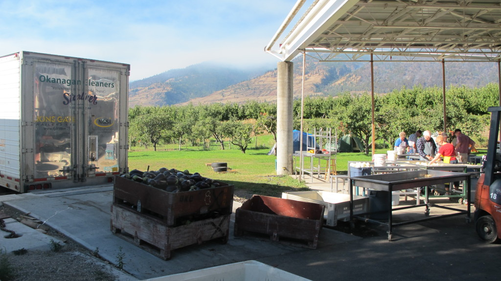 A group of volunteers help set up an outdoor event at a vineyard.