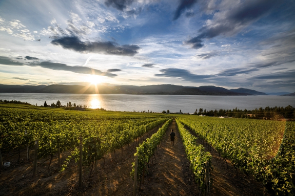 Award-winning winery CedarCreek in Kelowna