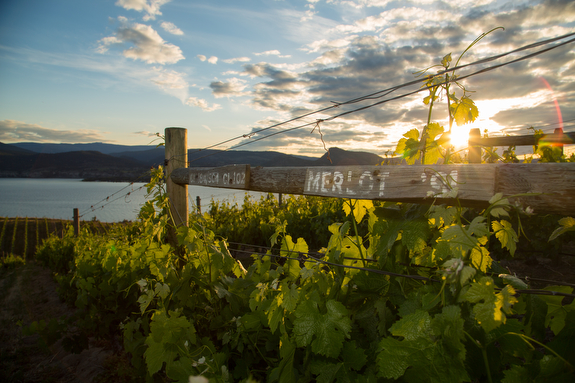 Award-winning winery Lake Breeze Vineyards in Naramata.