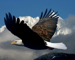 5 Places to See Eagles in BC