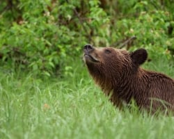 Great Bear Rainforest | Spirit Bear Entertainment