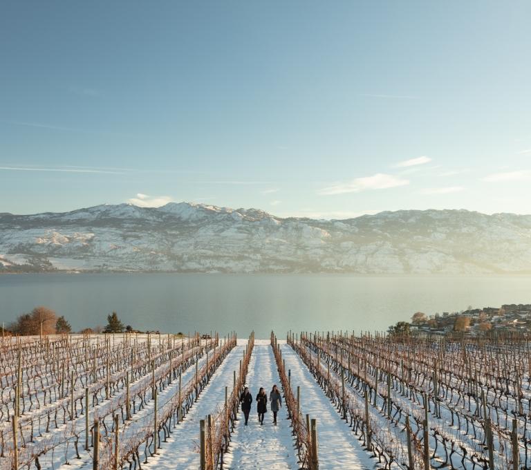 Quails' Gate Winery | Tourism Kelonw/Shawn Talbot Photography