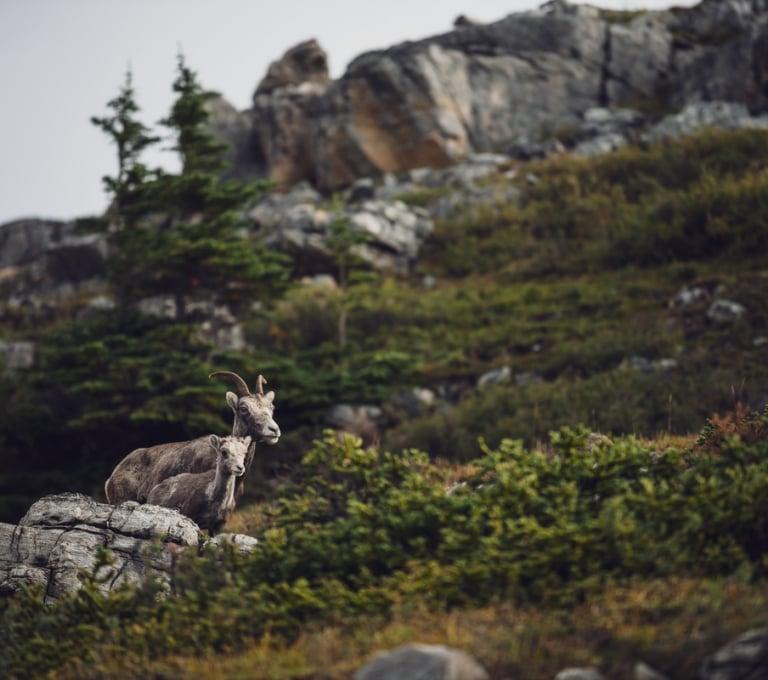 Northern BC Tourism/Andrew Strain