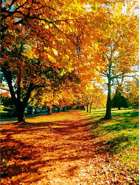 A park trail is covered in colourful fall leaves.