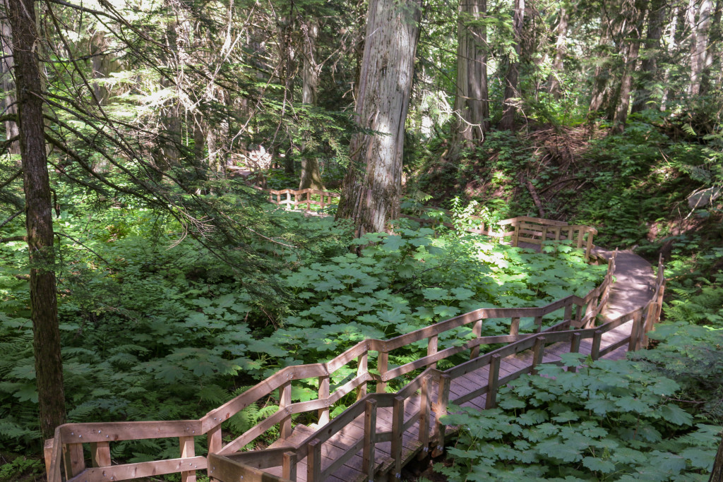 A wooden walkway in an overgrown forest.
