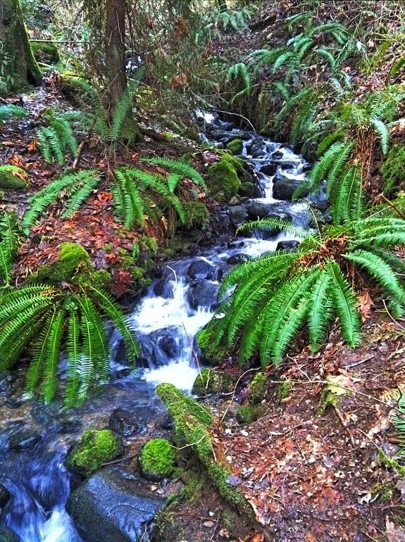 A rocky stream travels through dense vegetation.