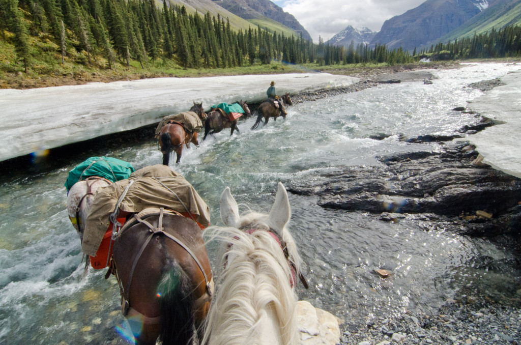 A line of horses walk through a fast moving stream, lined with trees.