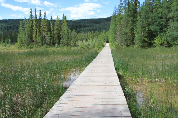 A wooden boardwalk stretched over a lush marsh area.