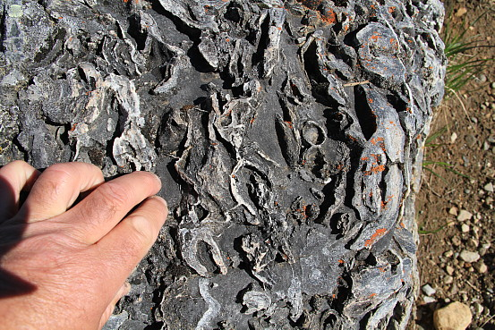 Fossil formations in a slab of sedimentary rock.