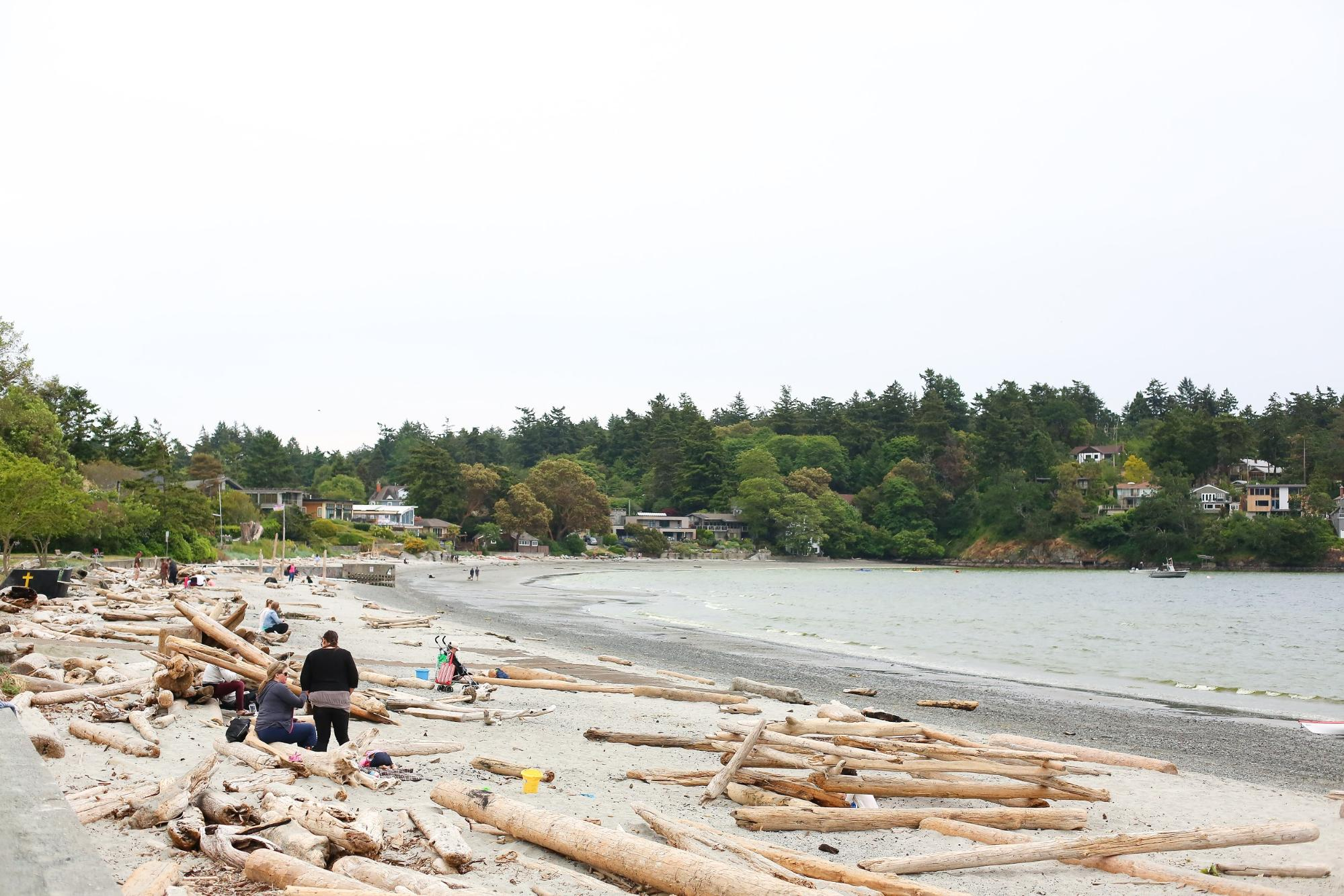 Groups of people explore a sandy beach covered in driftwood.