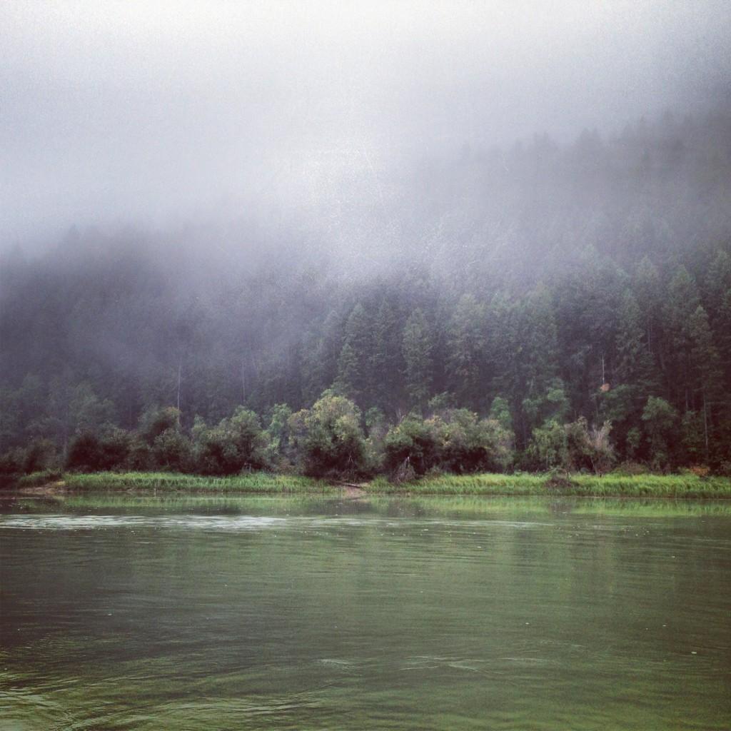Fog rolls across a dense seaside forest.