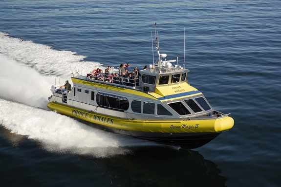 A yellow whale watching vessel speeds through the ocean.
