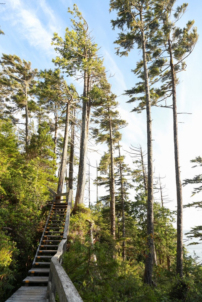 Wooden stairs climb up a densely forested mountain.