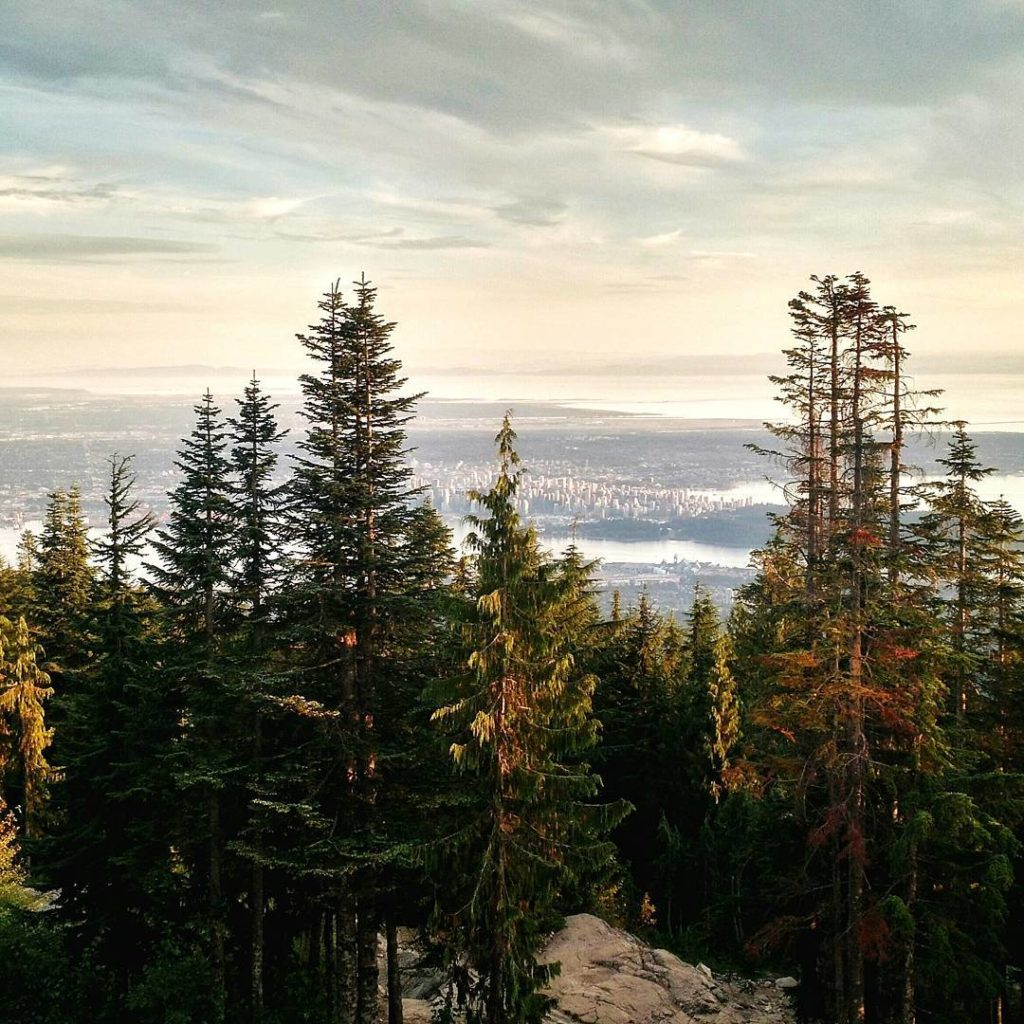 A dense forest overlooks the Vancouver skyline.
