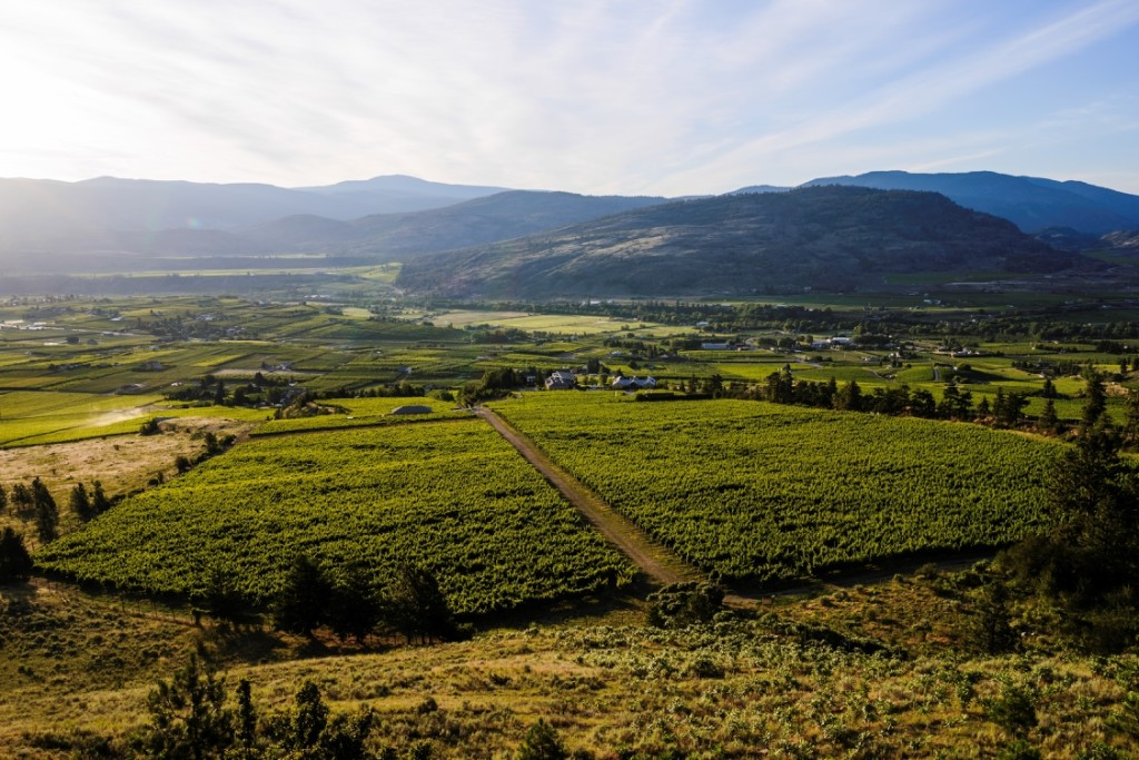 A rolling landscape and a lush vineyard under a clear blue sky.