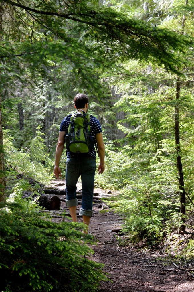 A hiker traverses a winding trail in a dense forest.