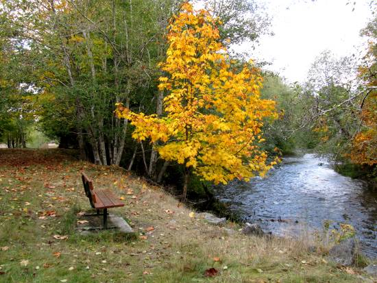 A riverside bench at the Little Qualicum River invites visitors to sit a while and appreciate nature.