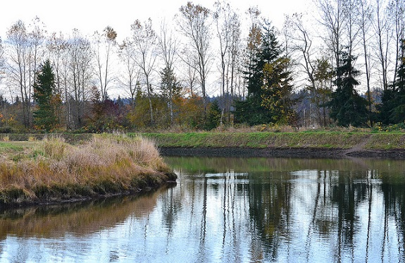 A quiet pond surrounded by fall foliage.