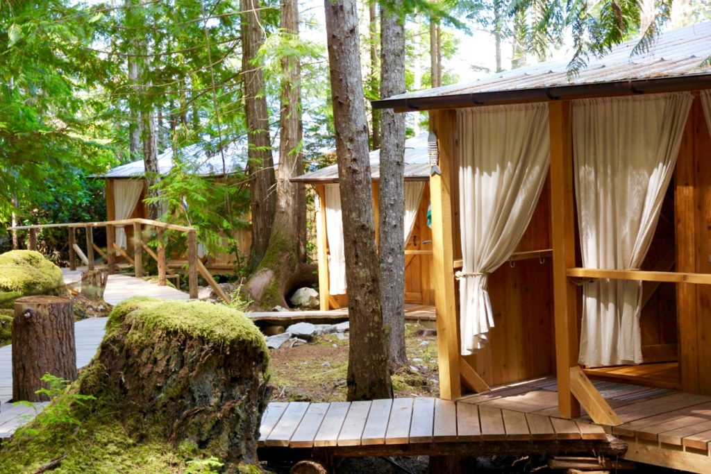 Eco-friendly cabanas nestled in a dense forest.