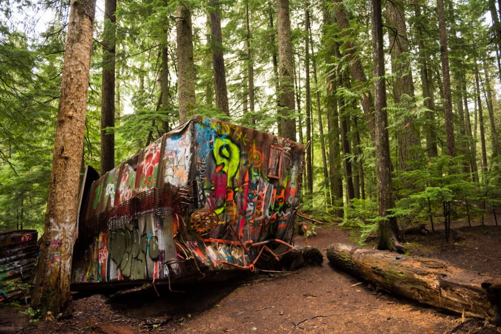 A graffiti-covered train wreck in the middle of a dense forest.