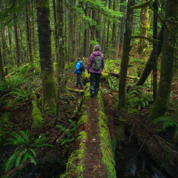 Two hikers cross a fallen moss-covered log in a dense rainforest.