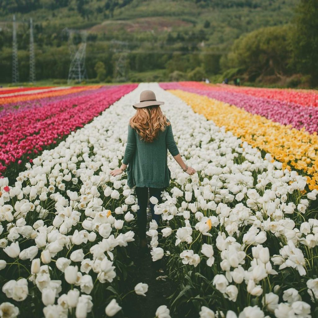 A woman walks through rows of colourful tulips.