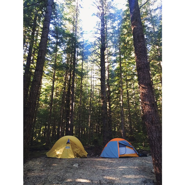 Two tents are pitched in a clearing, surrounded by tall trees.