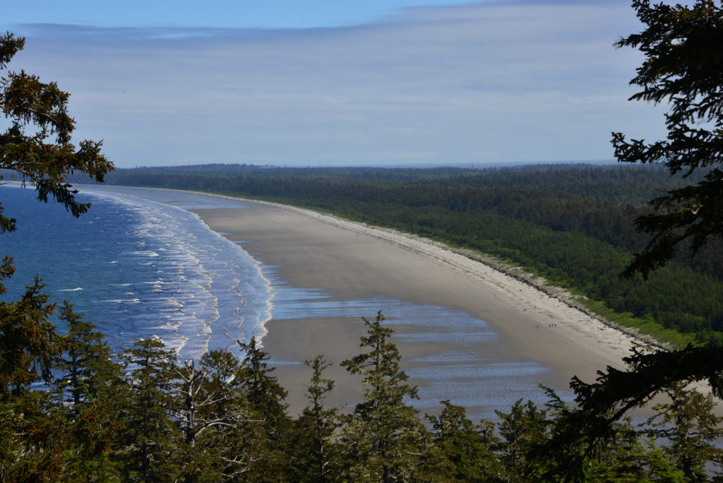 A sandy stretch of beach surrounded by dense vegetation.
