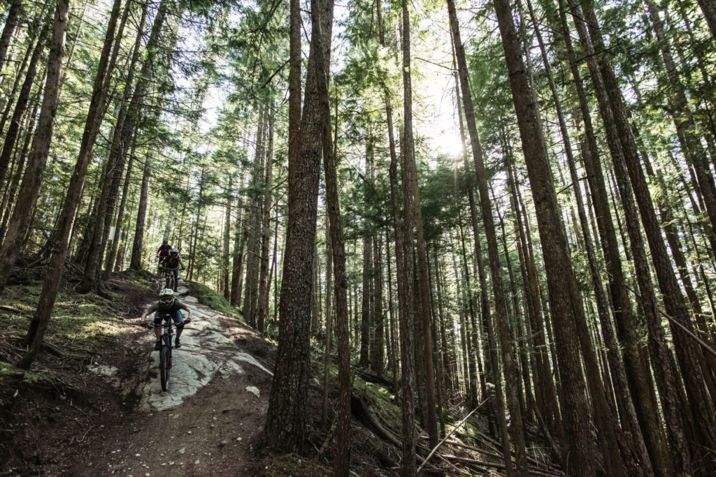 Two mountain bikers travel down a rugged forest path.