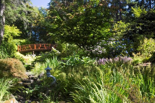 A lush, green garden on a sunny day.