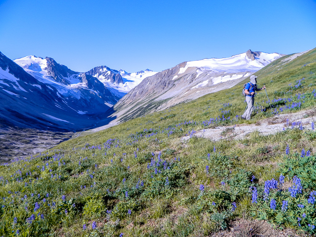 A hiker travels up a lush landscape, dotted with blue flowers, snow-capped mountains at his back.