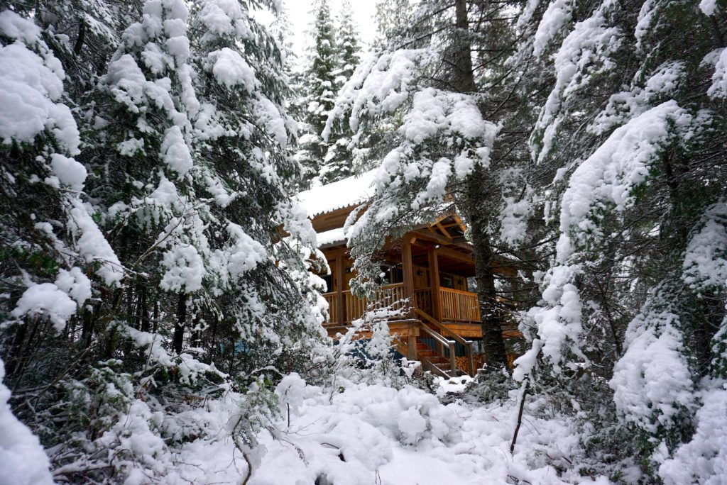 A snow-covered lodge is hidden deep in a dense forest.