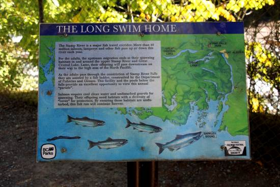 An interpretive sign explaining salmon spawning.